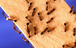 Ways to Keep Pests Out of Your House