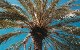 What You Need to Know About Your Palm Trees