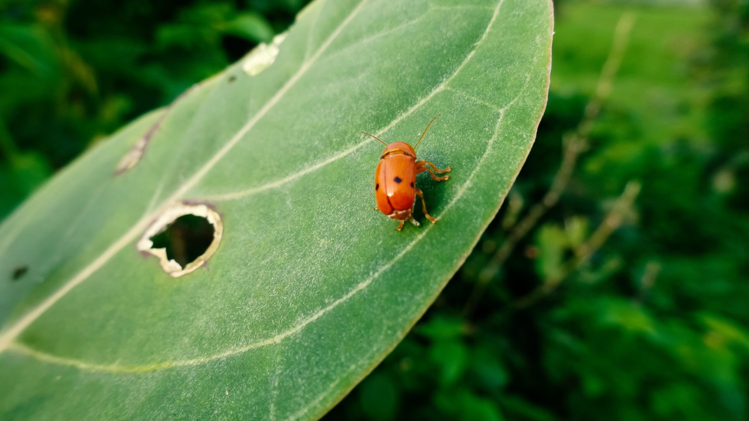A Guide to Common Bugs & Pests in Southwest Florida