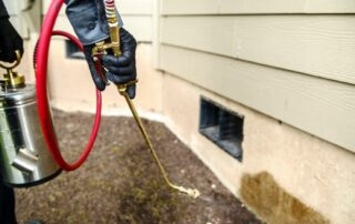 Why You Should Leave Pest Control to the Professionals