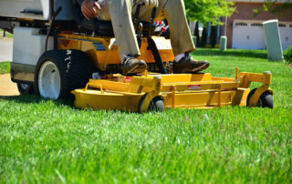 Top 5 Reasons You Need Year-Round Lawn Care