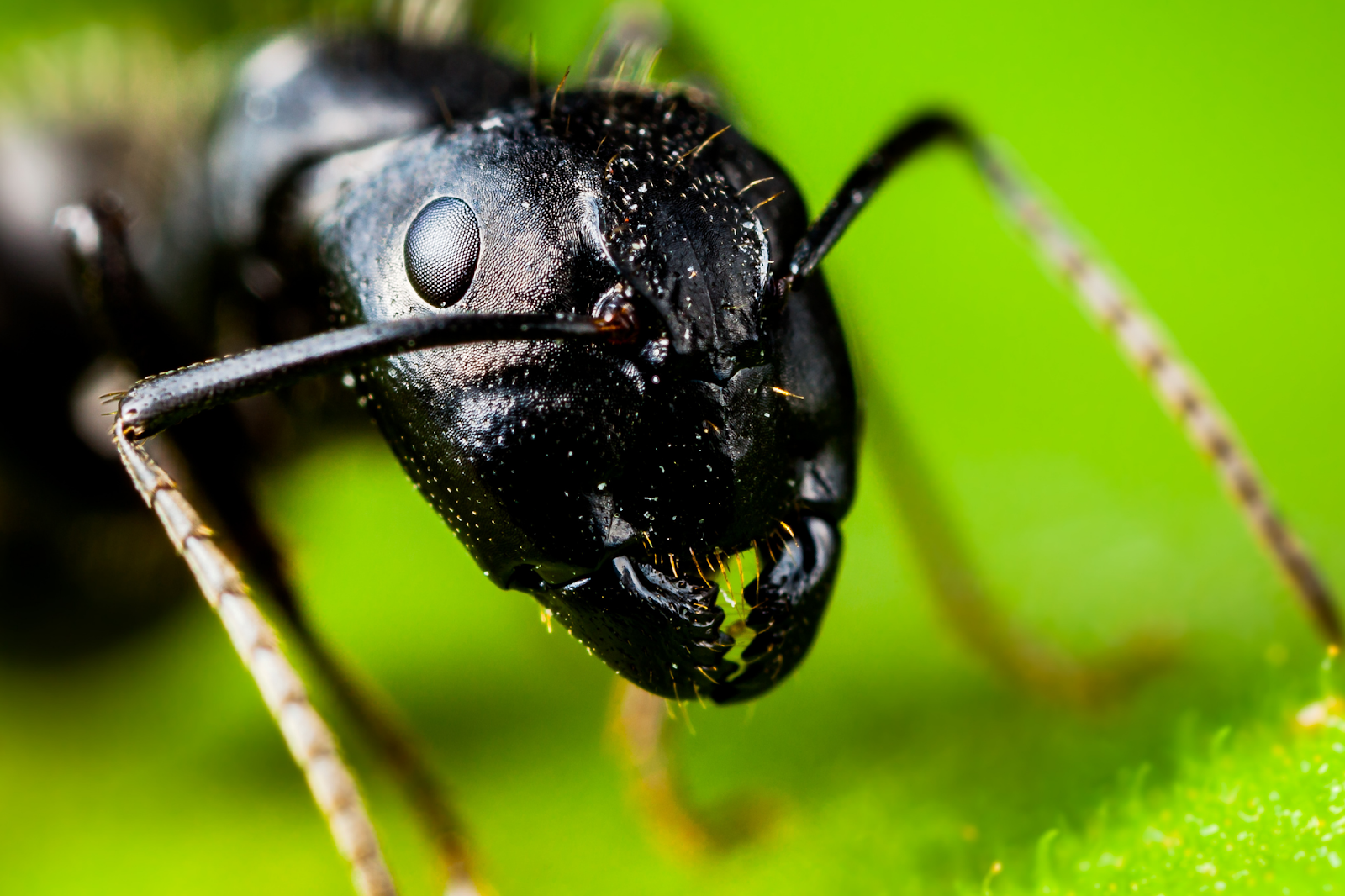 Keep ants and roaches out of your home by controlling these pests in your lawn